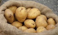 kartupelis